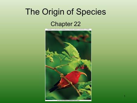 1 The Origin of Species Chapter 22. 2 The Origin of Life Alexander Oparin and coacervates Theory that extends evolution back to the Earth's beginning.