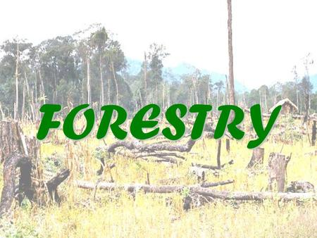 FORESTRY. What is forestry? Although there are important woodland areas in middle latitudes, such as the Black Forest of Germany, the main forest belts.