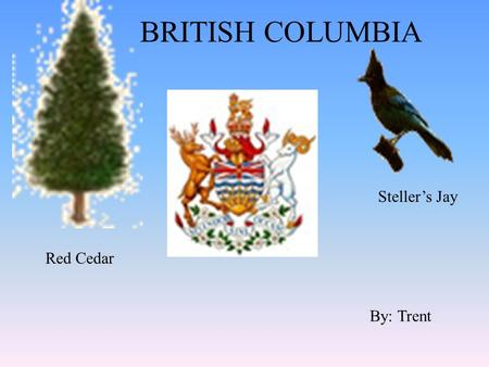 BRITISH COLUMBIA By: Trent Red Cedar Steller's Jay.