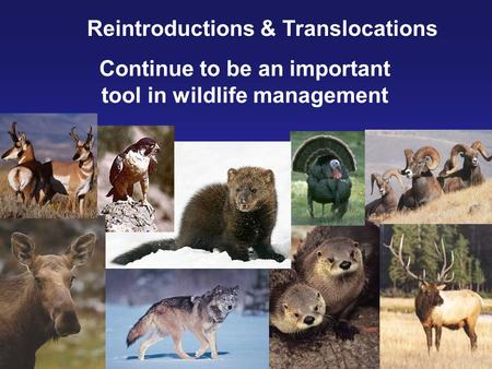 Reintroductions & Translocations Continue to be an important tool in wildlife management.