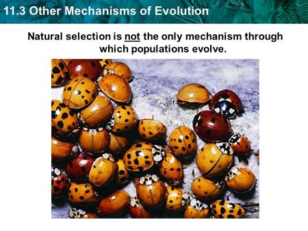 11.3 Other Mechanisms of Evolution Natural selection is not the only mechanism through which populations evolve.