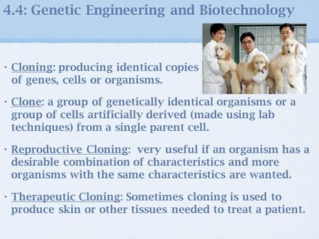 4.4: Genetic Engineering and Biotechnology Cloning: producing identical copies of genes, cells or organisms. Clone: a group of genetically identical organisms.