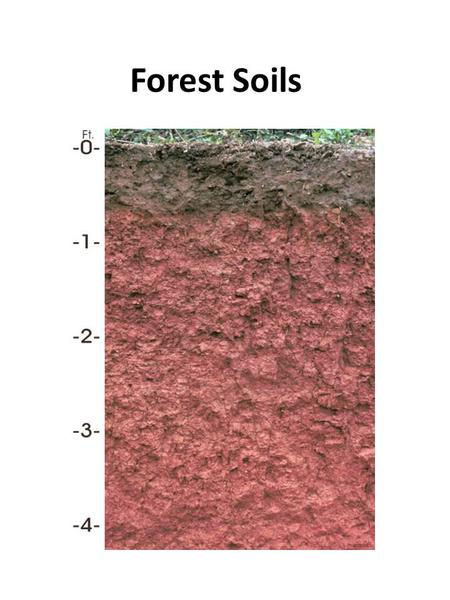 Forest Soils. CECIL SOIL SOIL PARTICLES SAND Largest Can be seen with the naked eye SILT 1/20 th of a millimeter in diameter or less Loose, fine grayish-brown.