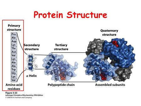 Protein Structure. Protein Structure I Primary Structure.