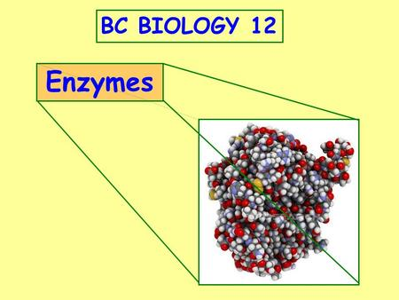 BC BIOLOGY 12 Enzymes.
