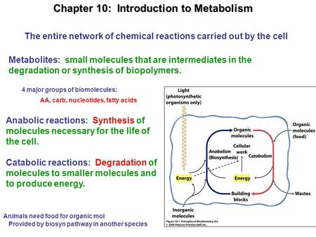Chapter 10: Introduction to Metabolism Metabolites: small molecules that are intermediates in the degradation or synthesis of biopolymers. Anabolic reactions: