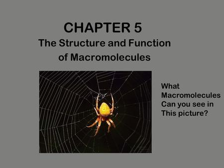 chapter 5 the structure and function The structure and function of large biological molecules chapter 5 overview: the molecules of life all living things are made up of four classes of large biological molecules: carbohydrates, lipids, proteins, and nucleic acids macromolecules are large molecules composed of thousands of covalently connected atoms.