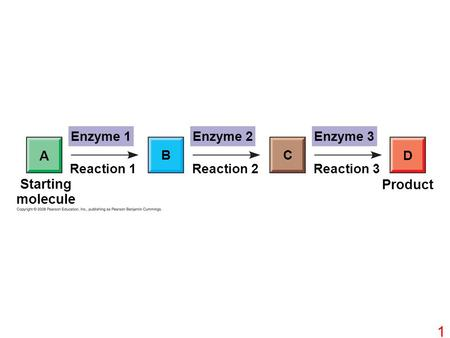 Enzyme 1Enzyme 2Enzyme 3 D CB A Reaction 1Reaction 3Reaction 2 Starting molecule Product 1.