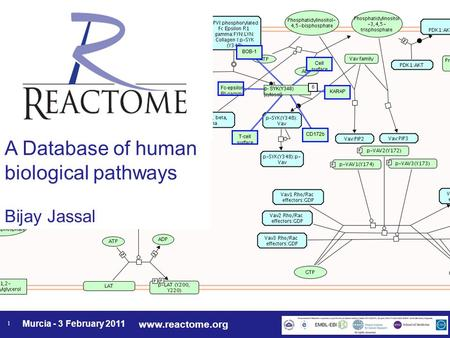 Www.reactome.org Murcia - 3 February 2011 1 A Database of human biological pathways Bijay Jassal.