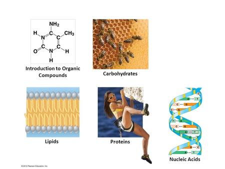 Introduction to Organic Compounds Carbohydrates Lipids Proteins Nucleic Acids.