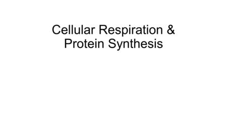 Cellular Respiration & Protein Synthesis. Anabolism Anabolism (add) Large molecules are synthesized from smaller molecules Dehydration Synthesis – H 2.