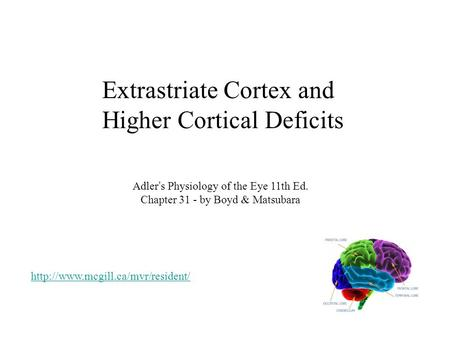 Extrastriate Cortex and Higher Cortical Deficits Adler's Physiology of the Eye 11th Ed. Chapter 31 - by Boyd & Matsubara
