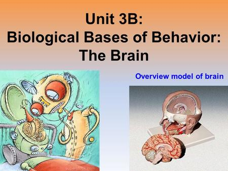 the brain psychology unit 3 Unit 1 (prologue chapter): history & approaches to psychology essential  question: how did  10/28/15: ap psychology 3-b (a) - brain monitoring tools.