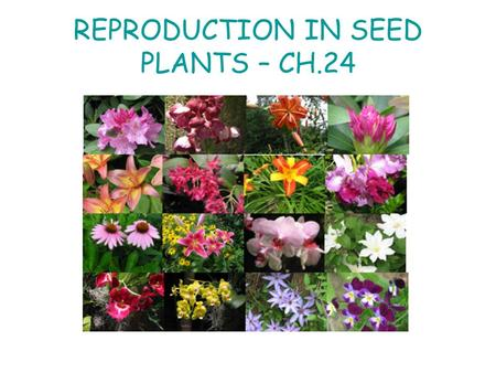 REPRODUCTION IN SEED PLANTS – CH.24. COMPLETE (PERFECT) FLOWERS COMPLETE FLOWERS HAVE 4 TYPICAL FLOWER PARTS: STAMENS, PISTILS, SEPALS, AND PETALS. THE.