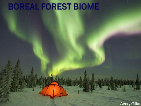 Avery Gilks. The average temperature in the boreal forest ranges from 5 degrees Celsius to - 5 degrees Celsius. These forests receive anywhere from 20cm.