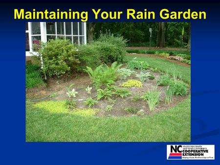 Maintaining Your Rain Garden. You can do better than this!