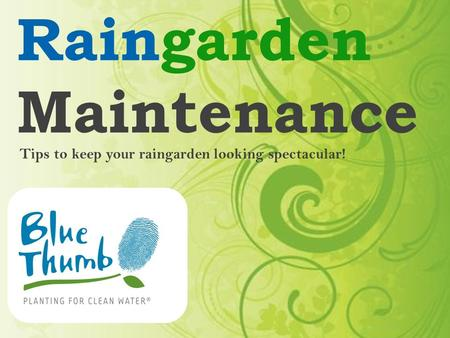 Raingarden Maintenance Tips to keep your raingarden looking spectacular!