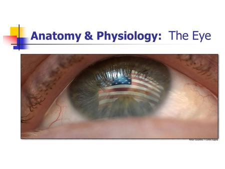 Anatomy & Physiology: The Eye A.Accessory structures of the eye Orbital Cavity Bones Optic Foramen Supra- orbital Foramen Fat pads Ethmoid Sphenoid Zygomatic.