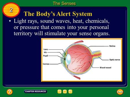 The Body's Alert System Light rays, sound waves, heat, chemicals, or pressure that comes into your personal territory will stimulate your sense organs.
