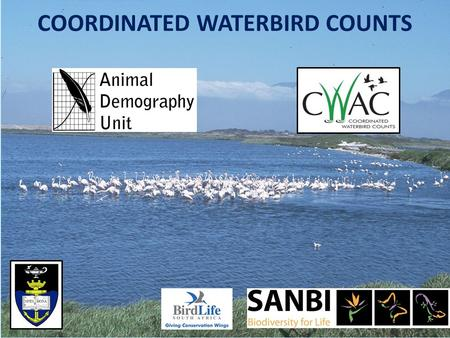 COORDINATED WATERBIRD COUNTS. Coordinated Waterbird Counts (CWAC) CWAC started in 1992 with 45 sites counted in South Africa Currently there are 645 wetlands.