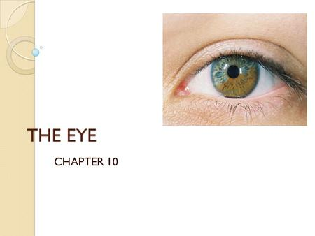 THE EYE CHAPTER 10. QOD #1: Pre-Test 1.) What are the 5 senses? 2.) T/F Of all the sensory receptors in the body, 70% are in the eyes. 3.) T/F Your eyebrows.