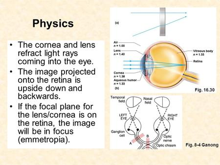 Physics The cornea and lens refract light rays coming into the eye. The image projected onto the retina is upside down and backwards. If the focal plane.