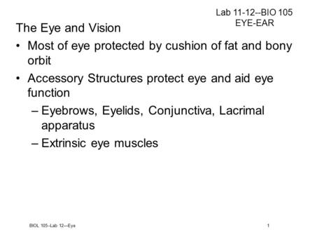 BIOL 105--Lab 12—Eye 1 The Eye and Vision Most of eye protected by cushion of fat and bony orbit Accessory Structures protect eye and aid eye function.