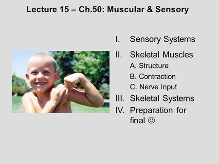 I.Sensory Systems II.Skeletal Muscles A. Structure B. Contraction C. Nerve Input III.Skeletal Systems IV.Preparation for final Lecture 15 – Ch.50: Muscular.