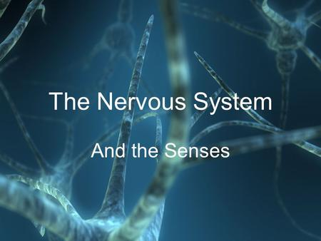 The Nervous System And the Senses. Human Organ System Overview Nervous SystemIntegumentary SystemSkeletal SystemMuscular SystemCirculatory System.