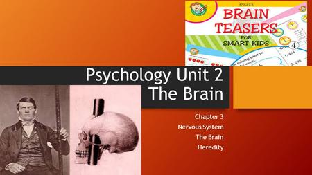 Psychology Unit 2 The Brain Chapter 3 Nervous System The Brain Heredity.