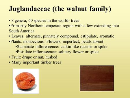 Juglandaceae (the walnut family) 8 genera, 60 species in the world- trees Primarily Northern temperate region with a few extending into South America Leaves: