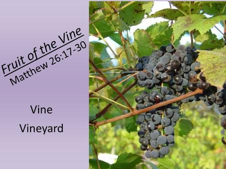 Fruit of the Vine Matthew 26:17-30 Vine Vineyard.