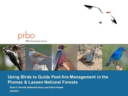 Using Birds to Guide Post-fire Management in the Plumas & Lassen National Forests Ryan D. Burnett, Nathaniel Seavy, and Diana Humple 4/21/2011.