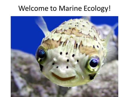 Welcome to Marine Ecology!. any student with schedule issues can see a counselor in room 193 Schedule issues are: 1.I have a hole in my schedule 2.I am.