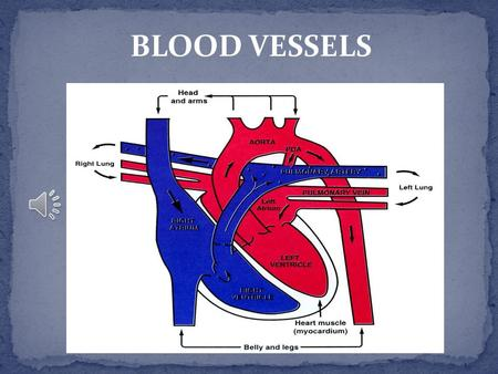 BLOOD VESSELS WHAT ARE BLOOD VESSELS? Blood vessels are intricate networks of hollow tubes that transport blood throughout the entire body.