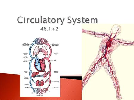 46.1+2.  Cardiovascular system = the blood, heart, & blood vessels  Lymphatic system = the lymph, lymph nodes, & lymph vessels  Together they make.