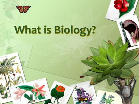 What is Biology?. What is Biology, you ask? Biology is the study of life. Living things are called organisms. Organisms include bacteria, protists, fungi,