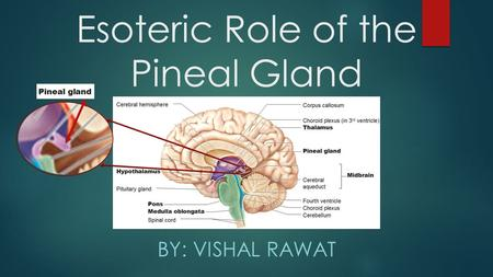 Esoteric Role of the Pineal Gland BY: VISHAL RAWAT.