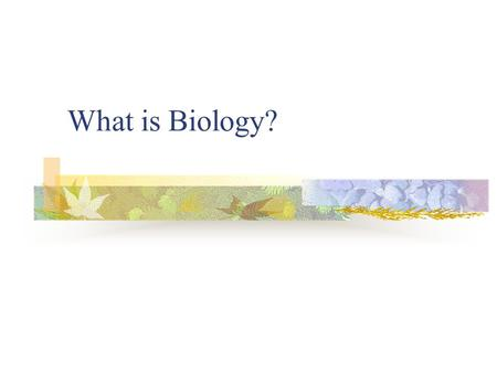 What is Biology?. Biology is the Study of Life Biologist study the interactions of life. Entomologist Anthropologist Ornithologist Etc…