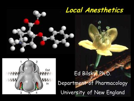 Local Anesthetics Ed Bilsky, Ph.D. Department of Pharmacology University of New England.