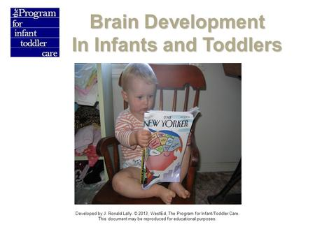 Brain Development In Infants and Toddlers Developed by J. Ronald Lally. © 2013, WestEd, The Program for Infant/Toddler Care. This document may be reproduced.