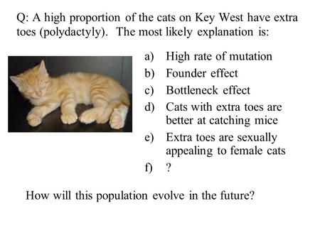 A)High rate of mutation b)Founder effect c)Bottleneck effect d)Cats with extra toes are better at catching mice e)Extra toes are sexually appealing to.