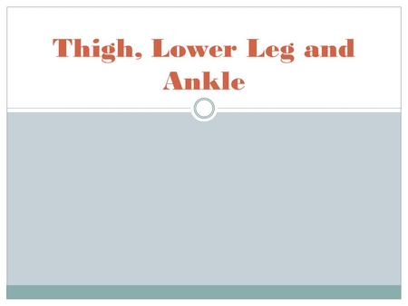 Thigh, Lower Leg and Ankle