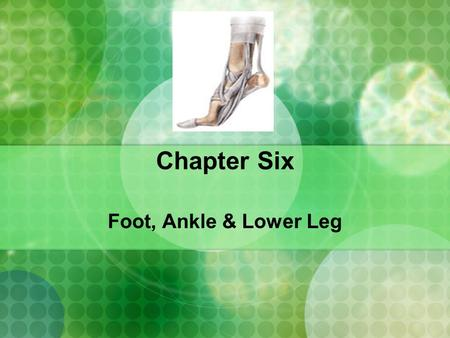 Chapter Six Foot, Ankle & Lower Leg.