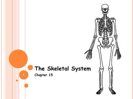 1 The Skeletal System Chapter 15. 2 FIVE JOBS OF THE SKELETAL SYSTEM 1. Provides shape and support 2. Enables you to move 3. Produces blood cells 4. Stores.