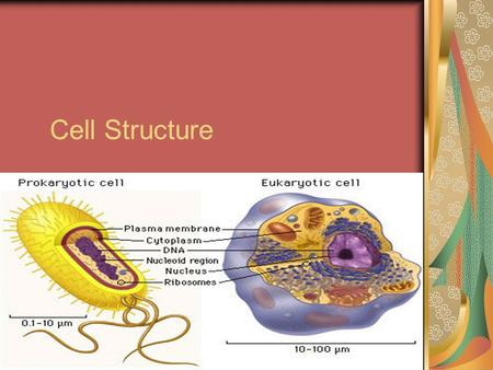 Cell Structure A. There are three basic structures of all types of cells: 1. Cell membrane a. Contains a bilayer of lipids b. Is selectively permeable.
