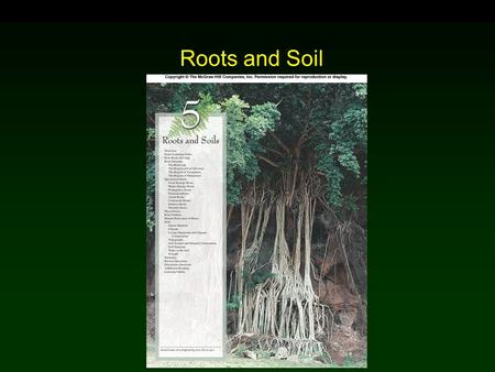 Roots and Soil Chapter 5.
