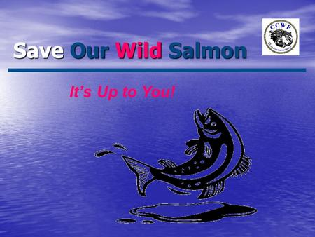 Save Our Wild Salmon It's Up to You!. Save Our Wild Salmon It's Up to You! Goals: Wild vs. Farmed? Eat Wild - It's Good For You! Survival of Wild? What.