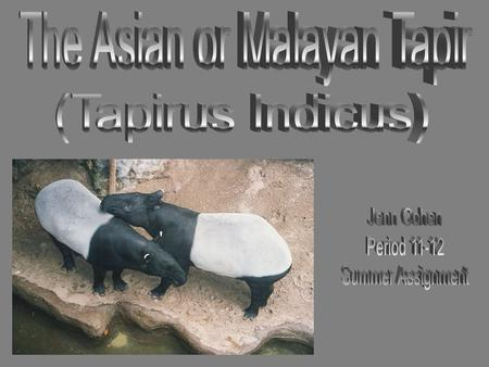  The Asian tapir (often referred to as Malayan) lives in Southeast Asia. While this tapir used to inhabit much of the region including the countries.