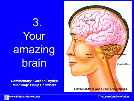 3. Your amazing brain Commentary: Gordon Dryden